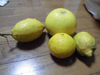 2.1柑橘1
