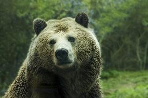 20161207_bear.jpg
