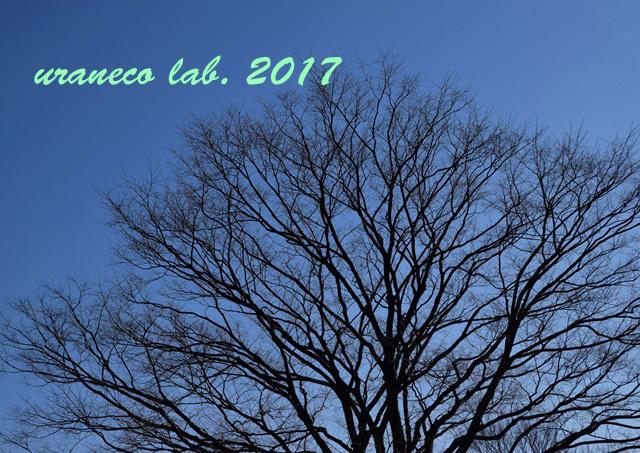 1月27日冬景色4