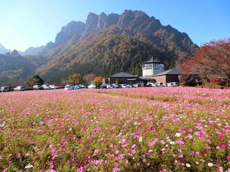 IMG_9296妙義山とコスモス