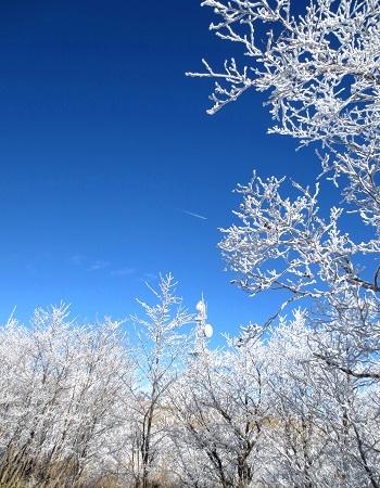 IMG_9426霧氷