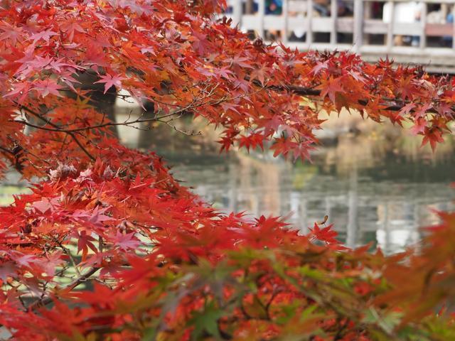higashiyama20161120-9_convert_20161125203551.jpg