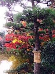 日比谷公園・紅葉