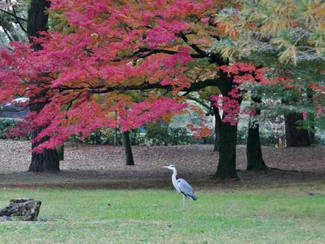 京都御苑3