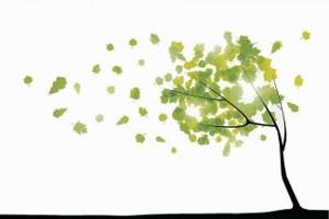 揺れる木 (300x200)