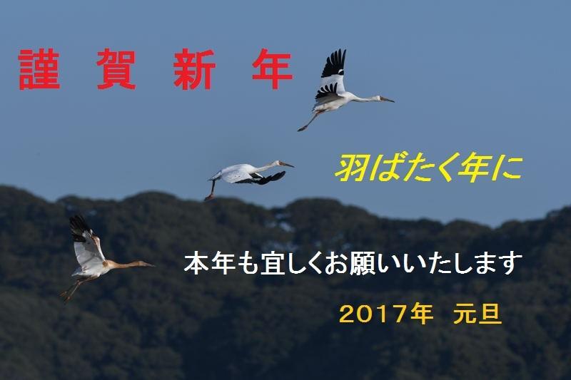 DSC_0399-ソデグロヅルAB-B