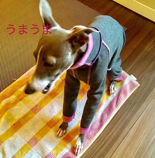 fc2blog_20161212134201377.jpg
