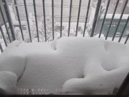 窓が凍り付いて