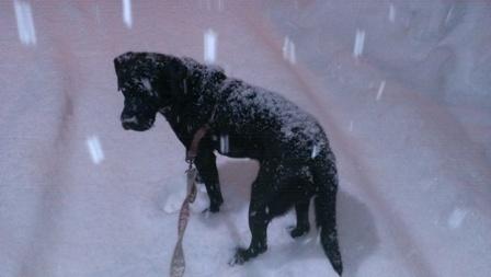 雪に埋もれるアルマくん