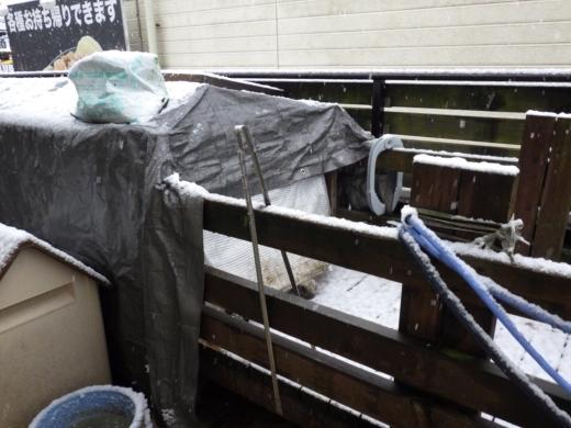 東京11月の雪 (4)