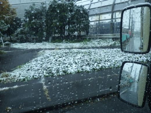 東京11月の雪 (6)