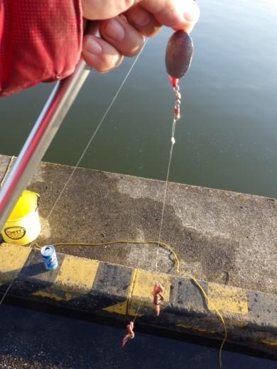 土浦港でワカサギ釣り (29)