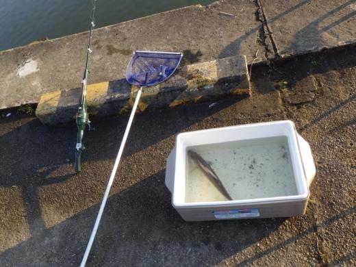 土浦港でワカサギ釣り (35)