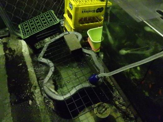 外水槽 (2)