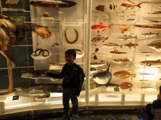国立博物館 (12)