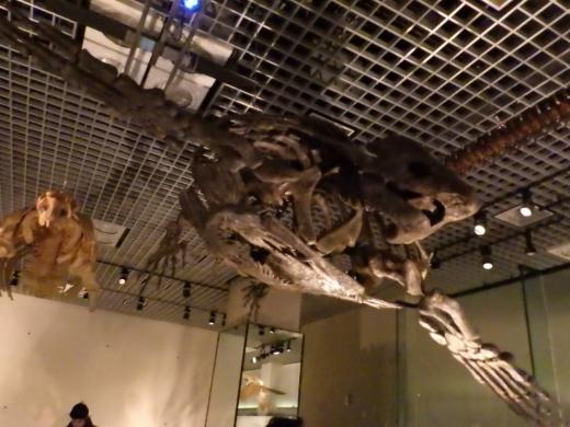 国立博物館 (22)