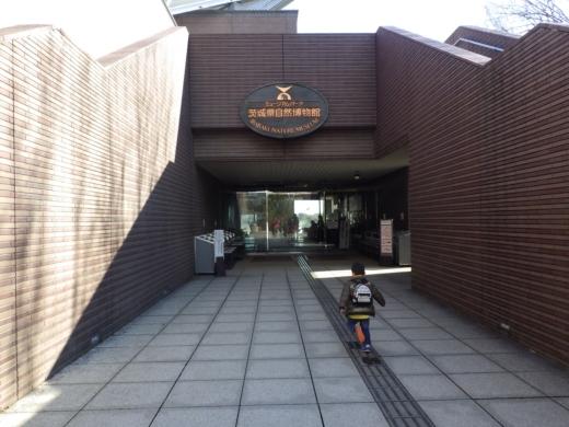 茨城県自然博物館 (4)