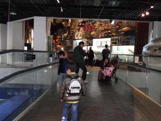 茨城県自然博物館 (7)