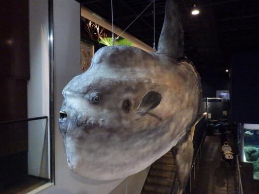 茨城県自然博物館 (8)