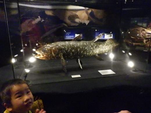 茨城県自然博物館 (9)