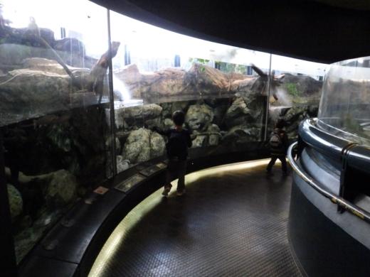 茨城県自然博物館 (12)