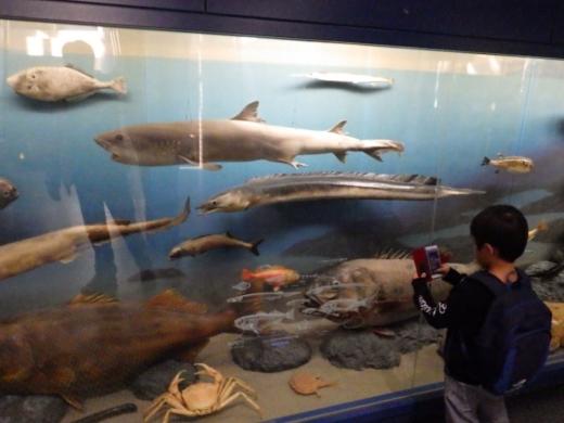 茨城県自然博物館 (14)