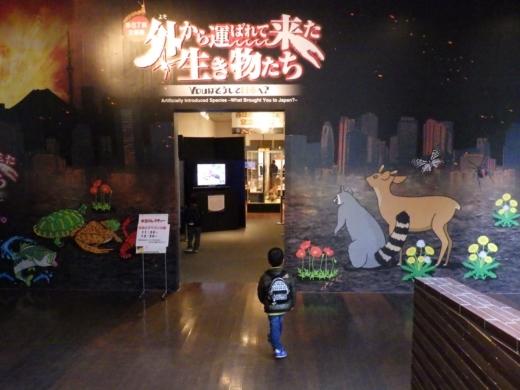 茨城県自然博物館 (23)