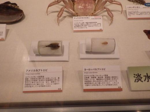 茨城県自然博物館 (27)