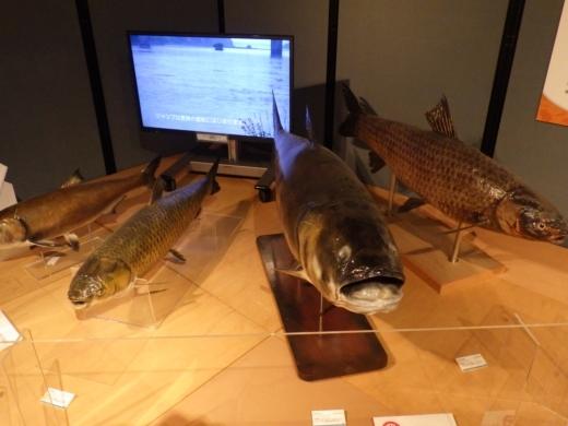 茨城県自然博物館 (30)
