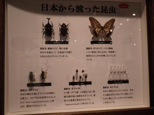 茨城県自然博物館 (32)