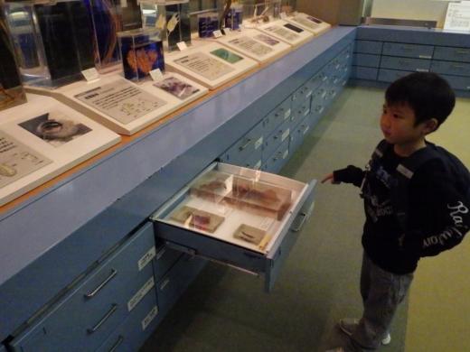 茨城県自然博物館 (36)