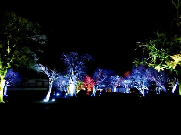 徳島LEDアートフェスティバル 城跡の山の呼応する森