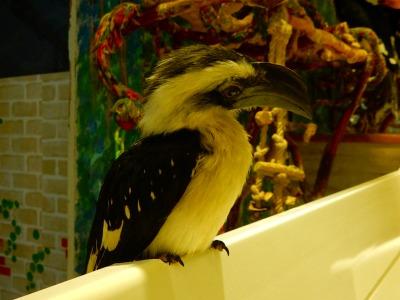鳥カフェ (2)