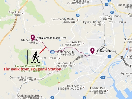 20161125中釜戸のモミジ (560x420)
