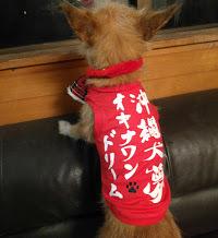 オキナワンドリーム 愛犬サンシンちゃん