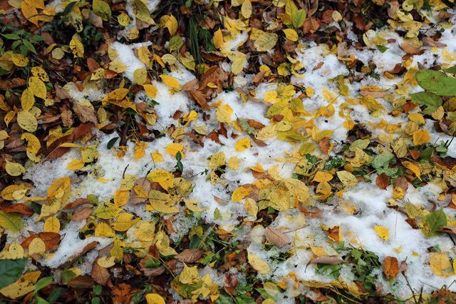 11月24日の雪