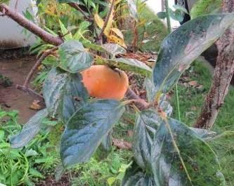 秋の果実3