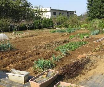 片付いた秋の菜園