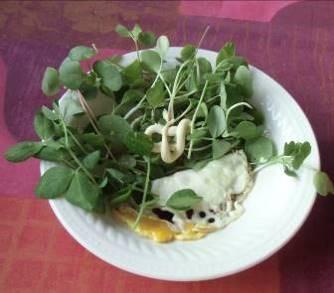 豆苗利用生野菜サラダ