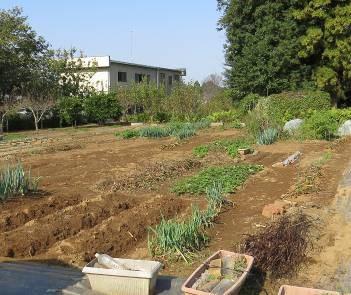 無堆肥有機農法の菜園1
