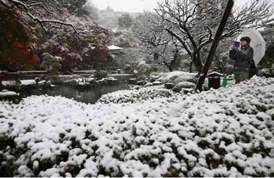 2016-11-30東京の11月24日の雪