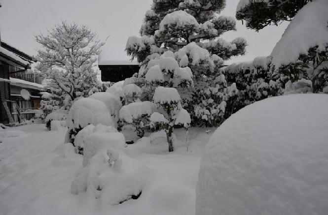 2017-1-15本日朝の雪景色