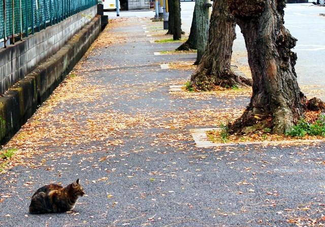 並木と猫2