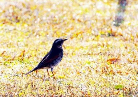 草むらの鳥2