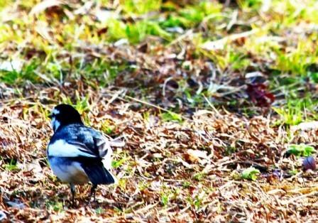 草むらの鳥8