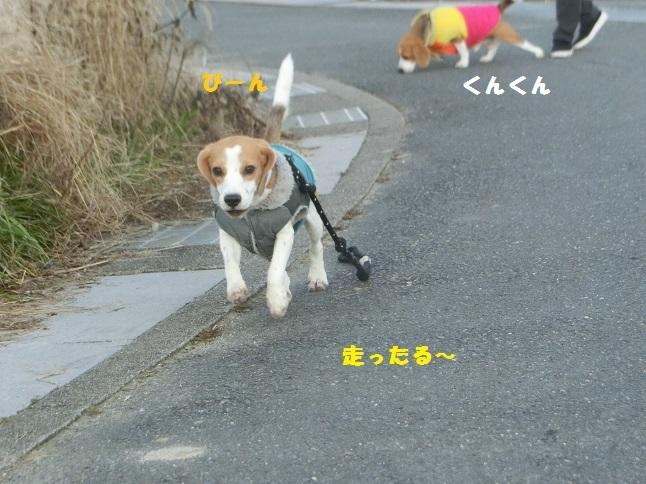 典型的散歩