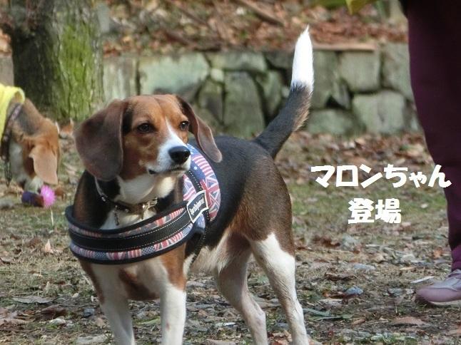 マロンちゃん登場