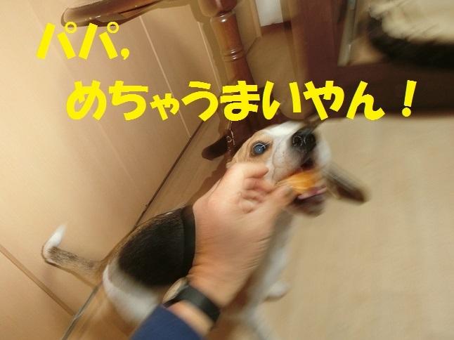 CIMG6388.jpg