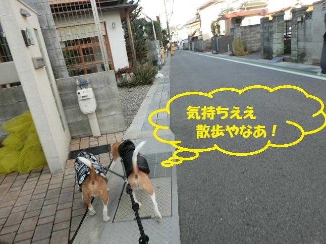 CIMG6705.jpg