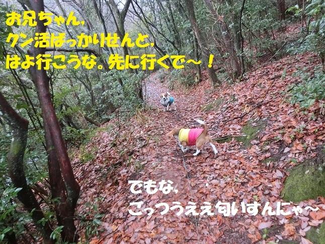 CIMG9013.jpg